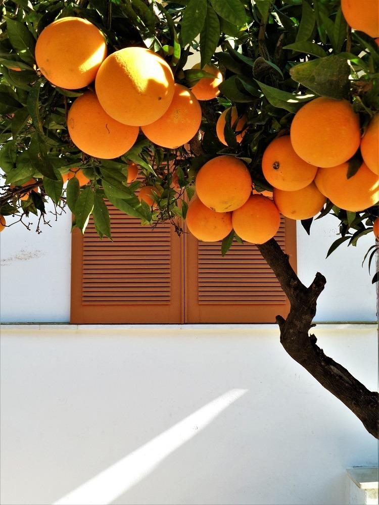 travel, orange, and yes image