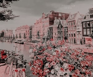 flowers, amsterdam, and aesthetic image