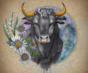 astrology, bull, and taurus image
