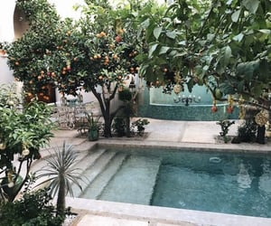 pool, nature, and tree image