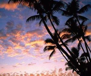 awesome, beach, and palm image