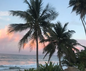 palms, palmsprings, and sky pink image