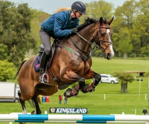 bay, jump, and equestrian image