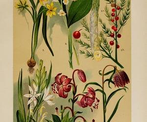 ferns, fungi, and mushroom image