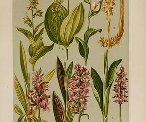 ferns, fungi, and flower image