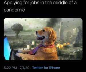 adulthood, dog, and gazette image