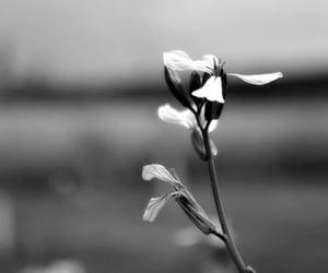 blackandwhite, flower, and nature image