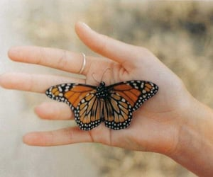 butterfly, beautiful, and insect image