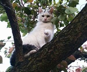 animal, tree, and cat image