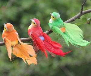 animal, طيور, and الوان image