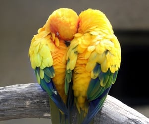 animal, الحٌب, and طيور image