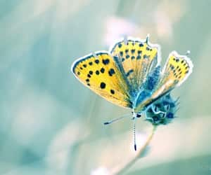 butterflies, butterfly, and nature image
