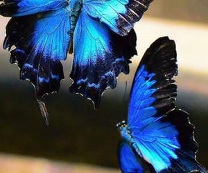 aesthetic, blue, and butterfly image