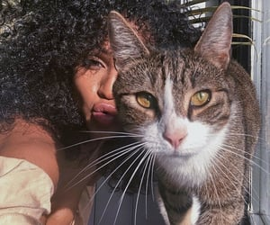 animal, cat, and cat eye image