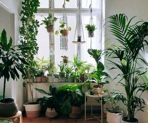 plant, plants, and house plants image