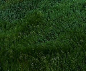 grass, gif, and nature image
