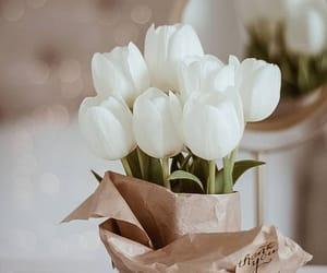 """Polubienia: 7,562, komentarze: 185 – Atena (@atenaopiela) na Instagramie: """"Niedzielna chwila... tulipany w moim wydaniu...mało u mnie takich prostych zdjęć a wiec…"""""""