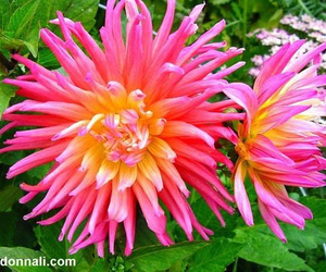 flowers, hot pink, and tropical image