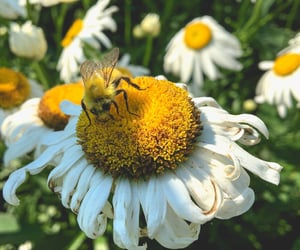 beautiful, bee, and bees image