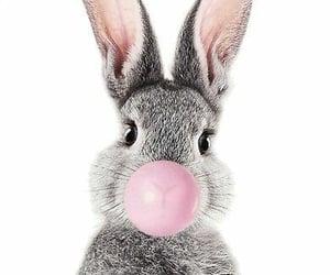animals, background, and gum image