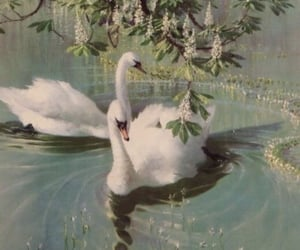 Swan, aesthetic, and animal image