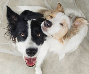 Border Collie Buddies @bordernerd on Instagram