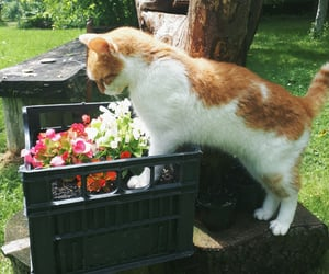 this is my garden and my neighbour's kitty ♡