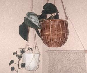 bohemian, plants, and hanging plants image