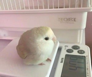 chubby, fat, and cute image