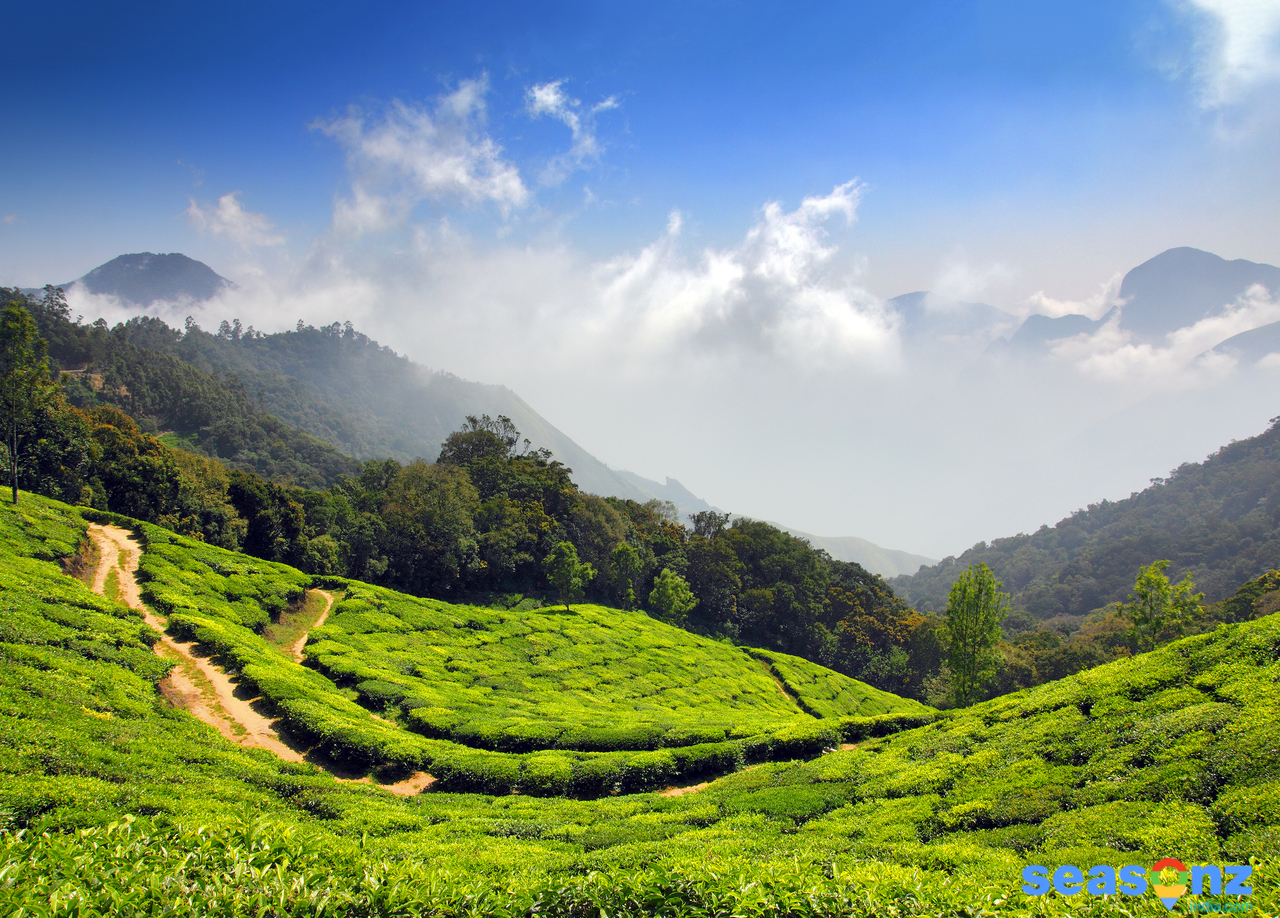 article, munnar tour packages, and munnar honeymoon packages image