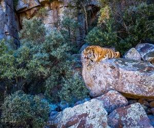 Tiger Rock by Clint Ralph