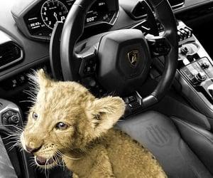 car, animal, and Lamborghini image