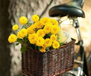 bicycle, flowers, and retro image