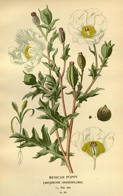 19th century, ícones, and plants, ornamental image