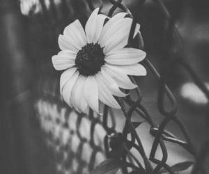 Image by ⚜️Luna de Antiguedades⚜️