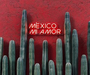 mexico, cactus, and red image