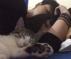 couple, cat, and cute image