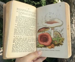 book, mushroom, and aesthetic image