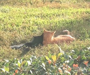cats vibing in the grass