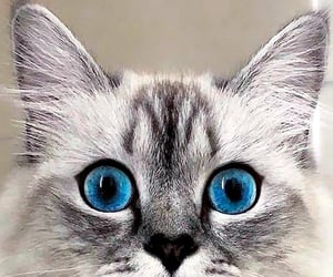 animal, beauty, and blue-eyed image