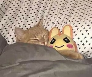 cat, kitty, and pfp image