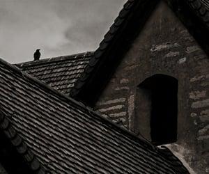 crow and theme image