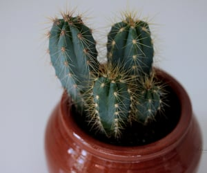 cactus, plant, and photography image