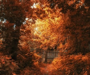 autumn, door, and fall image