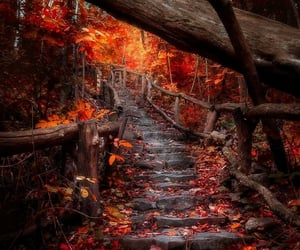autumn, stairs, and fall image