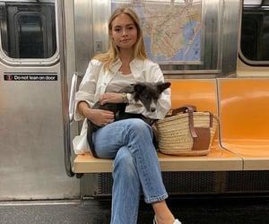 dog, pet, and train image