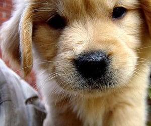Sooooo cute...............🐾😍❤️❣️‼️