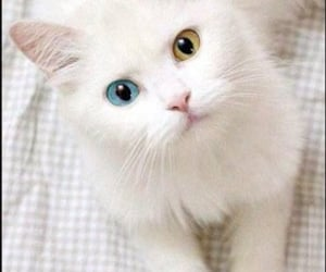 animal, beautiful, and kitten image