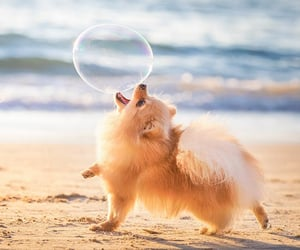 adorable, dogs, and animals image