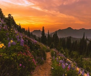 flowers, sunset, and beautiful image